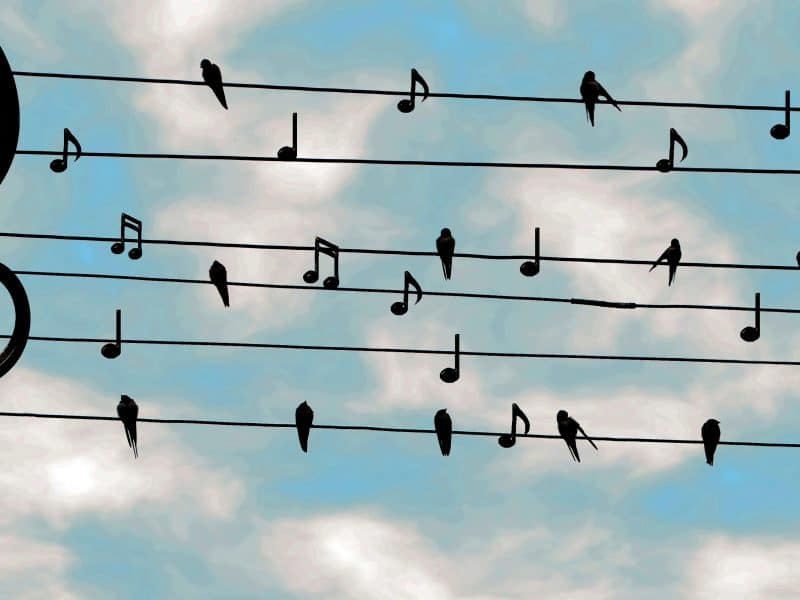 Müzik İndir Platformları İnternet Teknolojilerinden Payına Düşeni Almış mı?