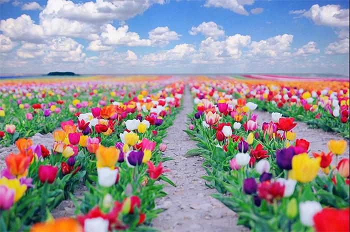 Çiçek Göndermek Bir Sanattır